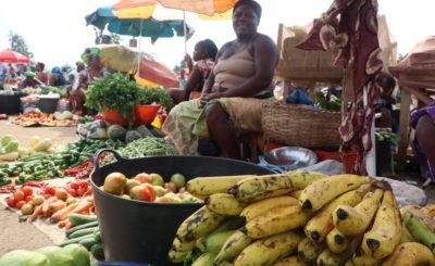 Alargamento do prazo para a apresentação de propostas para microiniciativas agroalimentares sustentáveis em São Tomé e Príncipe – Projeto PAS – Políticas Agroalimentares Sustentáveis